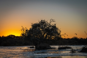 Chobe Tree at sunrise